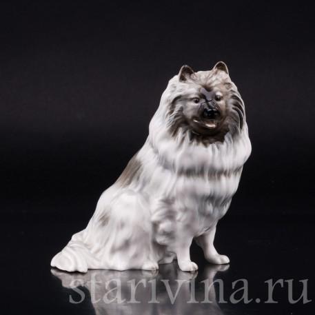 Статуэтка собаки из фарфора Шпиц, Hutschenreuther, Германия, 1970 гг.